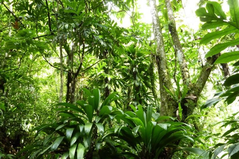 Images For > Rainforest Background