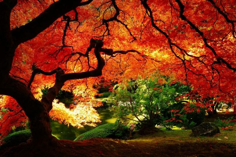 autumn wallpaper 1920x1080 for tablet