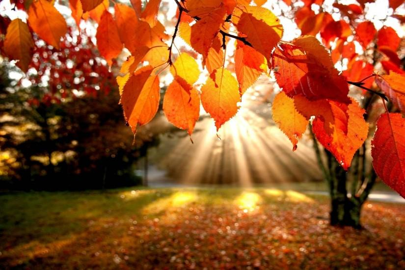 free download fall backgrounds 1920x1200 for android tablet