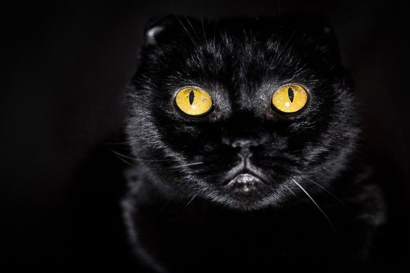 Black Cats With Yellow Eyes