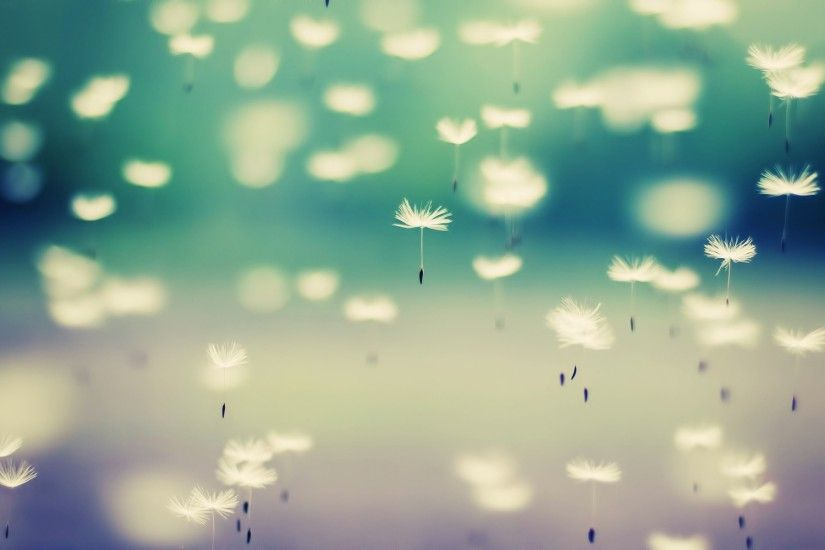 Cool Dandelion Wallpaper. Â«
