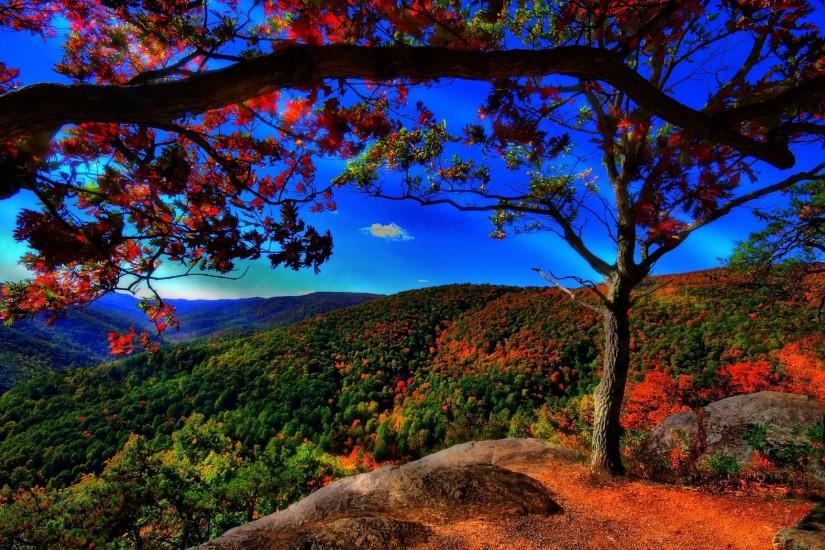 Download Autumn Free Landscape Wallpaper 2560x1600 | HD Wallpapers .