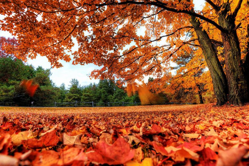 HD Fall Desktop Background | ... Gate Red Forest Autumn Fall HD .