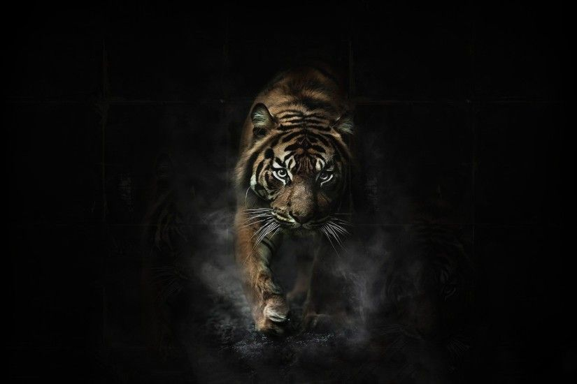 ... 1920x1080 Tiger Wallpaper Full HD 65 images 1920x1080 Tiger Desktop ...