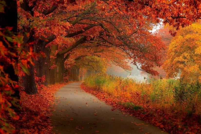 Fall Leaves Scenery Wallpaper High Resolution