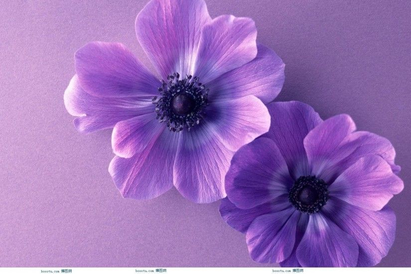 Cute Flower wallpaper x