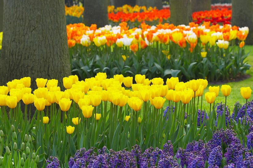 hd flower garden wallpaper. Â«Â«