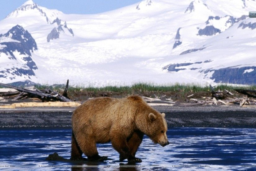 "You are viewing wallpaper titled ""Brown Bear"" ..."