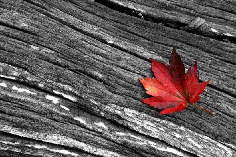 Image detail for -black white and red photography Wallpaper