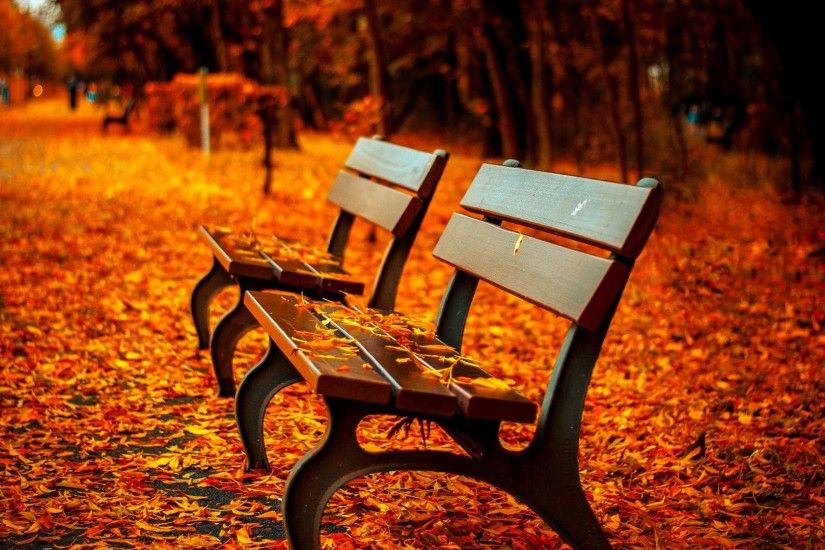 ... Garden Design with AUTUMN fall landscape nature tree forest bench  wallpaper with Garden Landscapes from wallpaperup