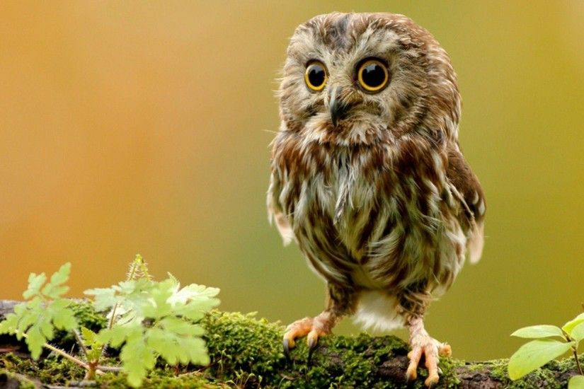 Cute Owl Wallpaper | Download Wallpapers