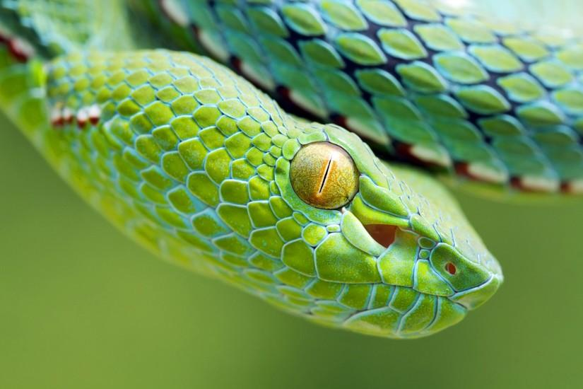 ... Viper Snake Wallpapers - Wallpaper Cave ...