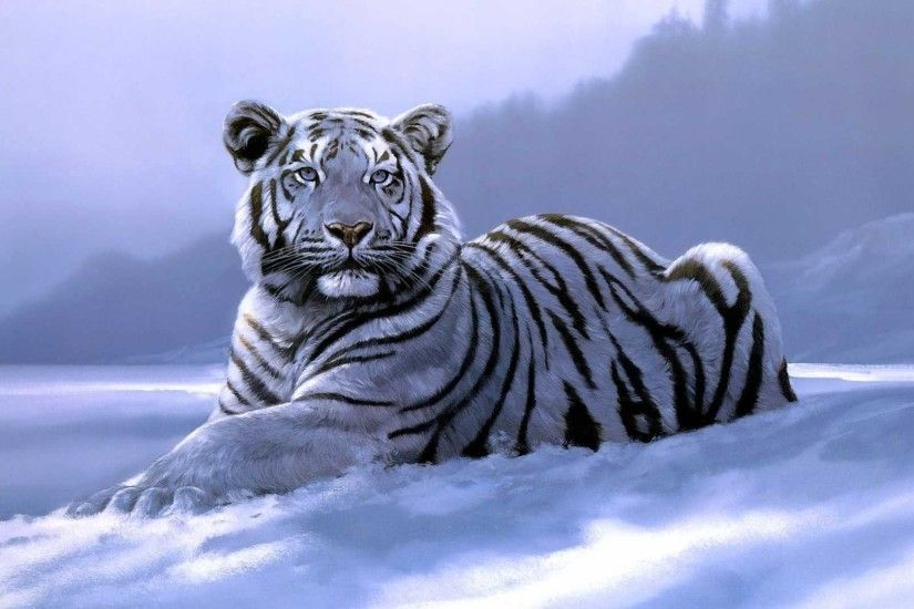 White Tiger Wallpaper Best Collection Of Tiger HD Wallpapers