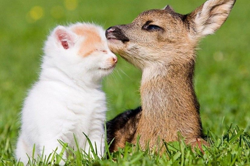 Deer Tag - Farm Amazing Child Cute Animal Cat Beauty Deer Super Pictures Of  Baby Animals
