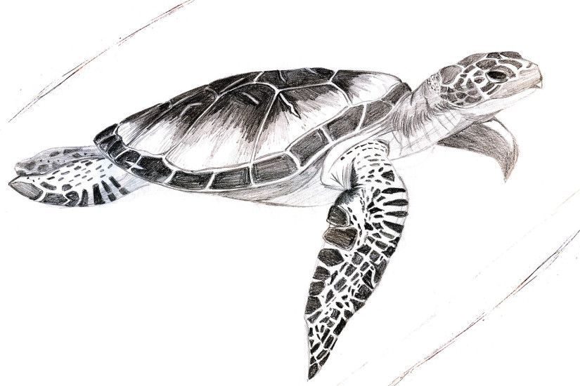 Free designs - Painted turtle with details tattoo wallpaper