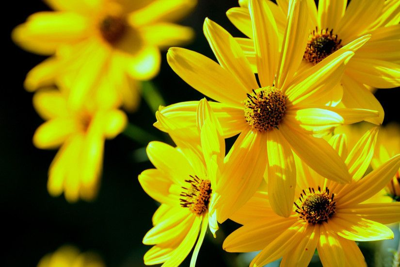 Wallpapers Collection: «Yellow Flowers Wallpapers» 2048×1410 Wallpapers  Yellow Flowers (40