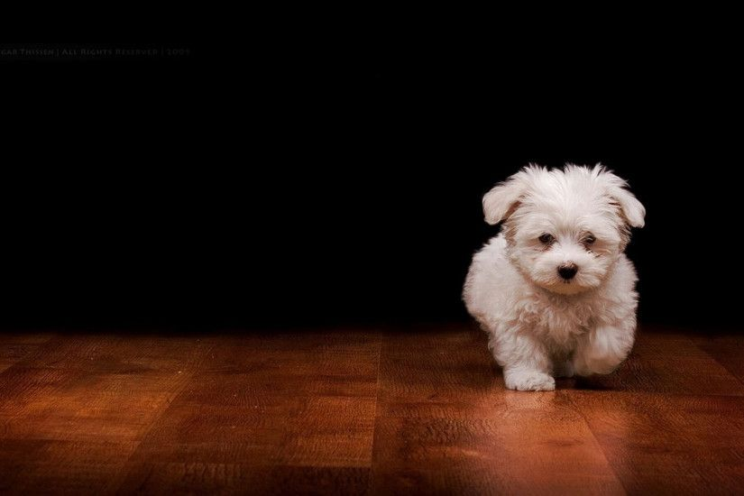 Splendid Cute Dog Wallpaper - Qygjxz together with Puppy With Mustache  Wallpaper