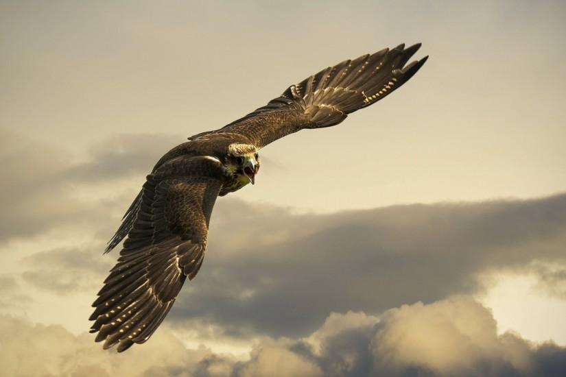 Preview wallpaper eagle, flight, sky, wings, clouds 3840x2160