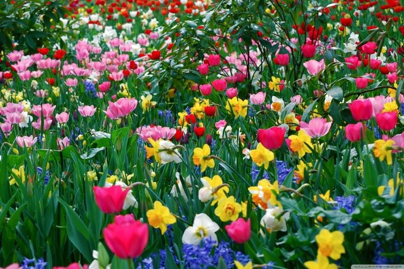 Widescreen Springtime Wallpaper Desktop Background