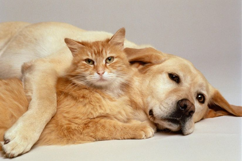 Wallpaper Of Cute Cats And Dogs Cat And Dog Wallpapers – Wallpaper