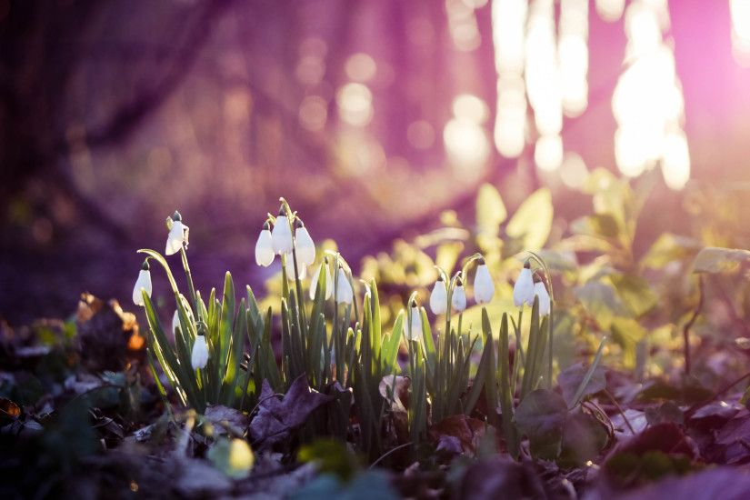Preview wallpaper spring, snowdrops, flowers, wood, first 3840x2160