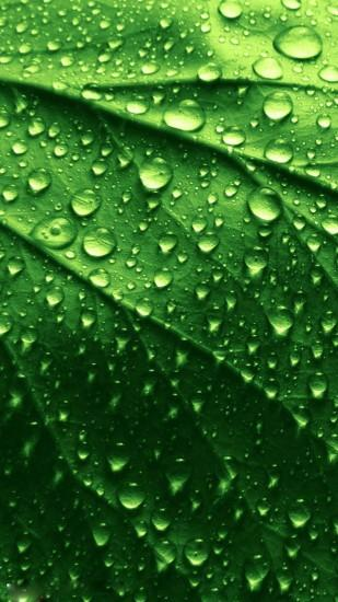 HD green leaves and water drops iphone 6 plus wallpaper