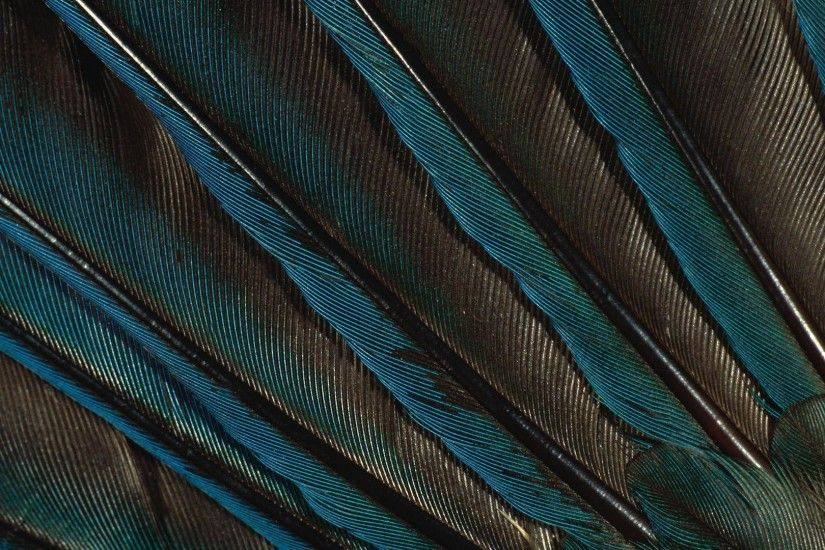 1920x1080 Peacock Feather, Pen, Green Wallpaper, Peacock, Feathers .