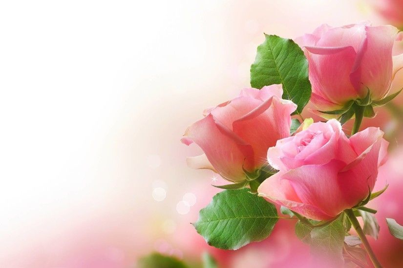 Wallpapers For > Light Pink Rose Background Wallpaper