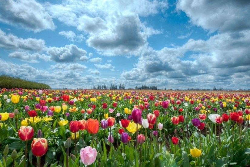 Field of Flowers Background | hd-wallpapers-field-of-flowers-background