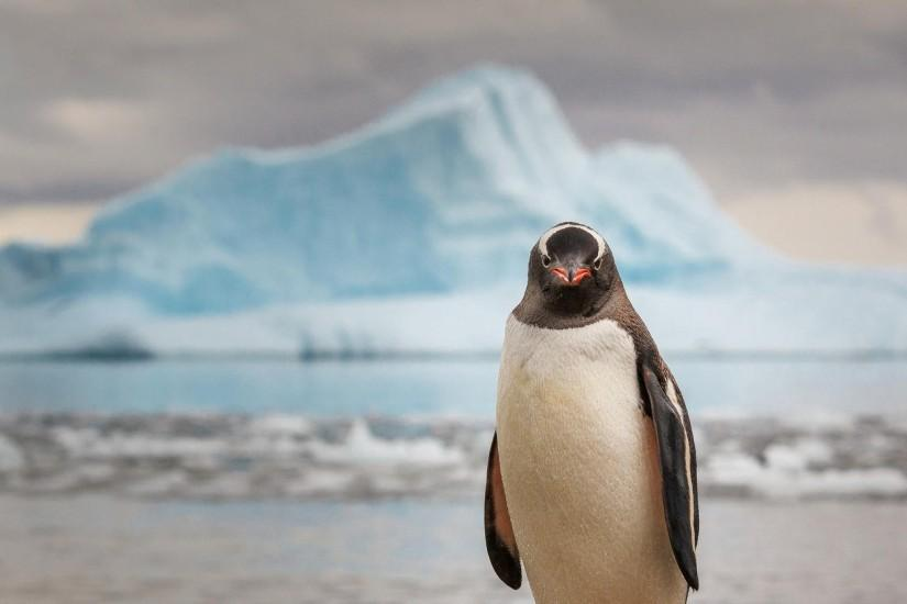 Preview wallpaper penguin, ice, ocean, animal, bird 2560x1440