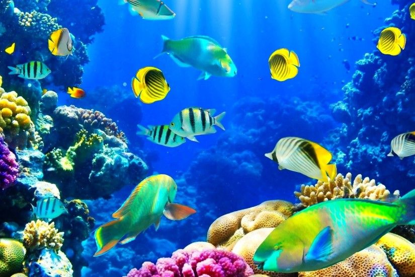Fishes Tag - Nature Ocean Sealife Fishes Sea Fish Underwater Wallpapers  With for HD 16: