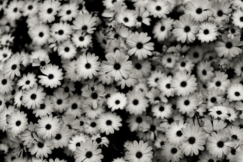 download free black and white background 1920x1200