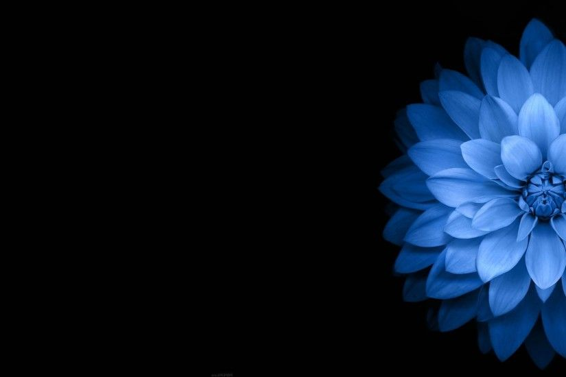 Dark blue flower wallpaper - Abstract wallpapers - #41437