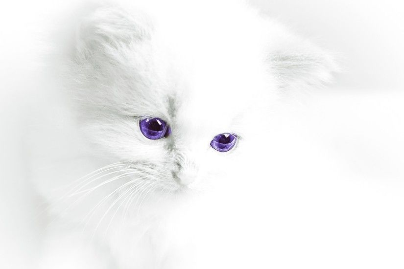 And in the 2nd wallpaper is the cute white cat