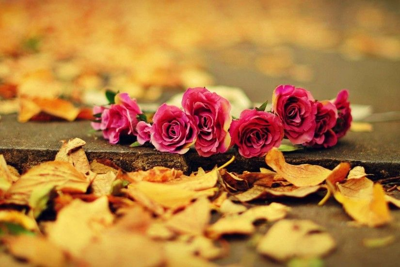 Beautiful Red Roses Autumn Wallpaper Wallpaper