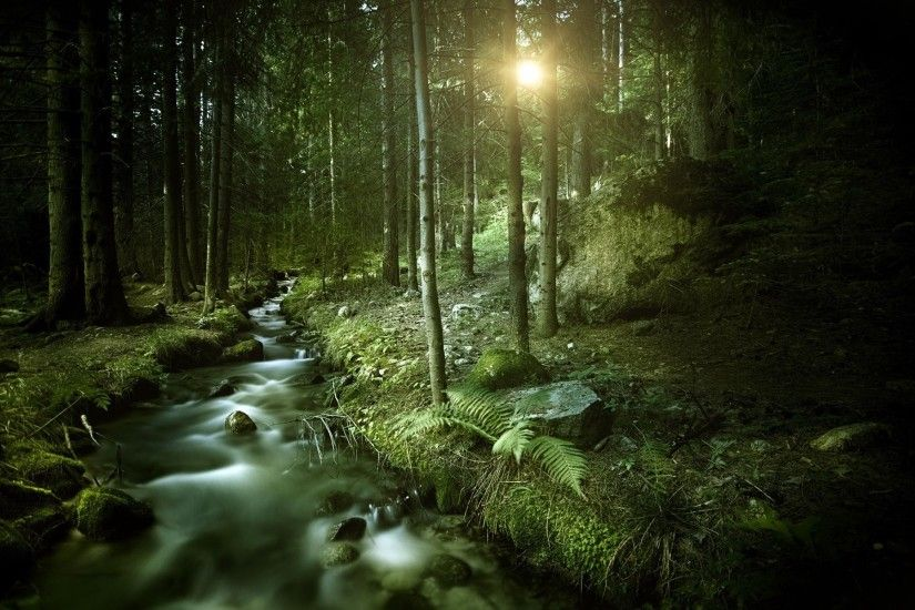 DArk Forest HD Wallpapers : Find best latest Dark Forest HD Wallpapers for  your PC desktop
