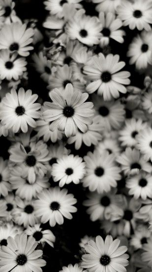 Preview wallpaper black white, flowers, grey, daisies 1440x2560