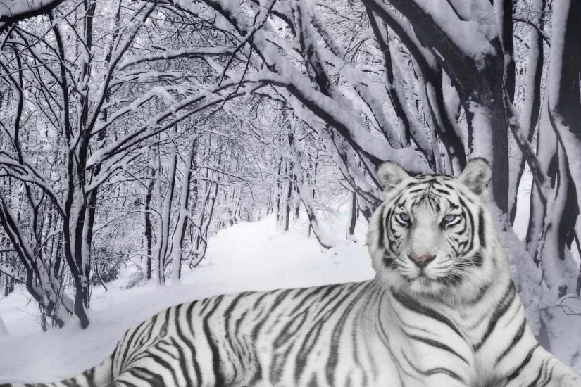 Tiger Wallpaper Free: White Tiger Wallpapers #3035 |.Ssofc