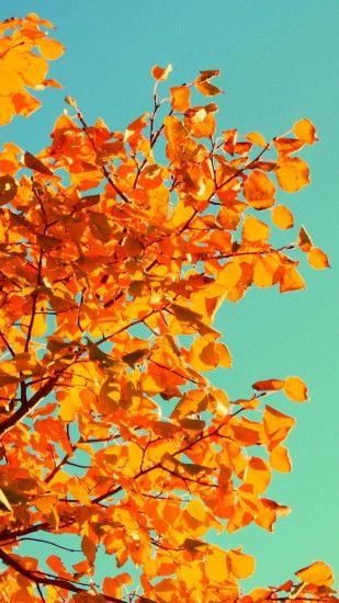 Fall Tree Art iPhone 5s Wallpaper Download | iPhone Wallpapers, iPad  wallpapers One-stop