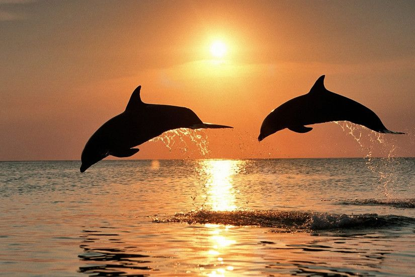 Dolphin Jump Wallpaper Image
