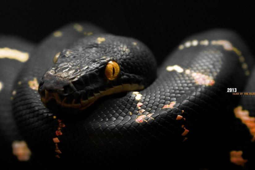 Black Snake wallpaper - 874616