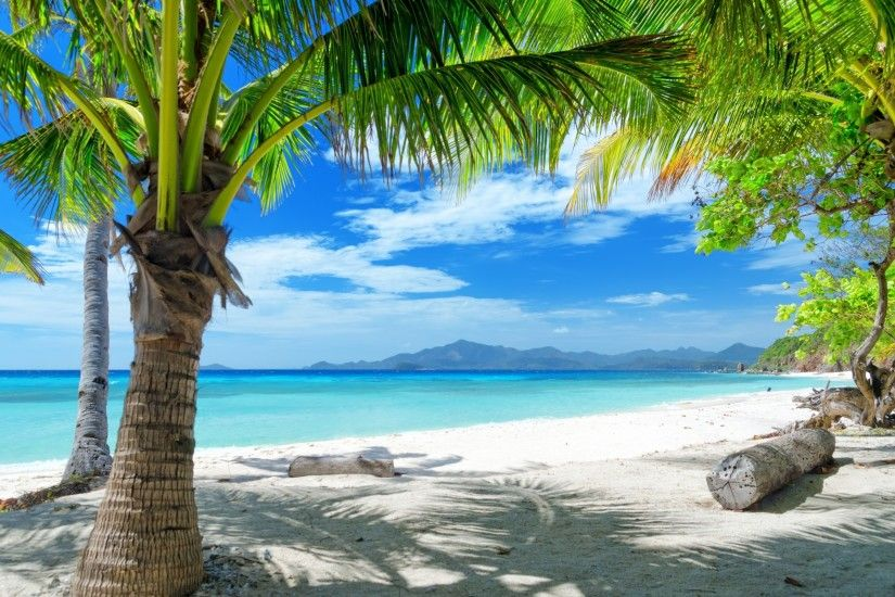 Tempting ocean beach with palm trees HD Desktop Wallpaper | HD Desktop .