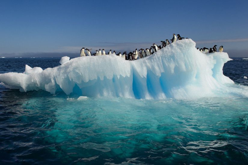 HD Awesome View Of Nature Penguins On Ice In Antarctica Ocean Best Desktop  High Resolution Wallpapers Of Ocean Ice