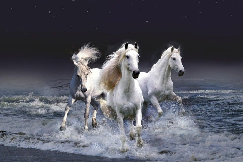 Wild Horses And The Sea Wallpaper