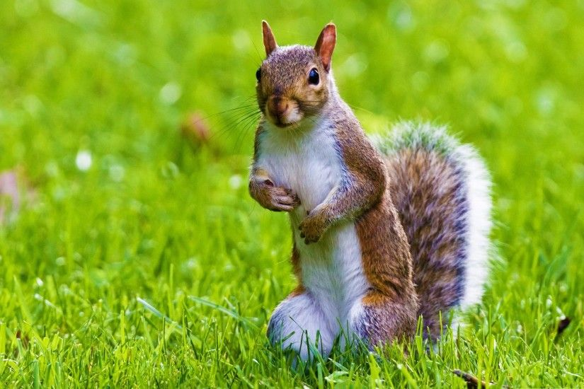 $@50 Animals Squirrel ( Khiskoli) Photos Backgrounds hd wallpapers