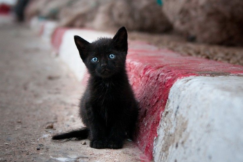 544 Views 419 Download Black Cat with Blue Eye HD Photo