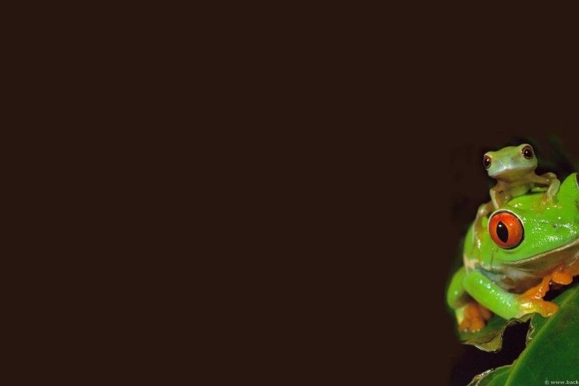 Frog HD Wallpaper 13