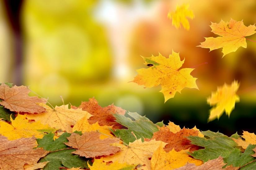Free Leaves Yellow Autumn Wallpapers HD.