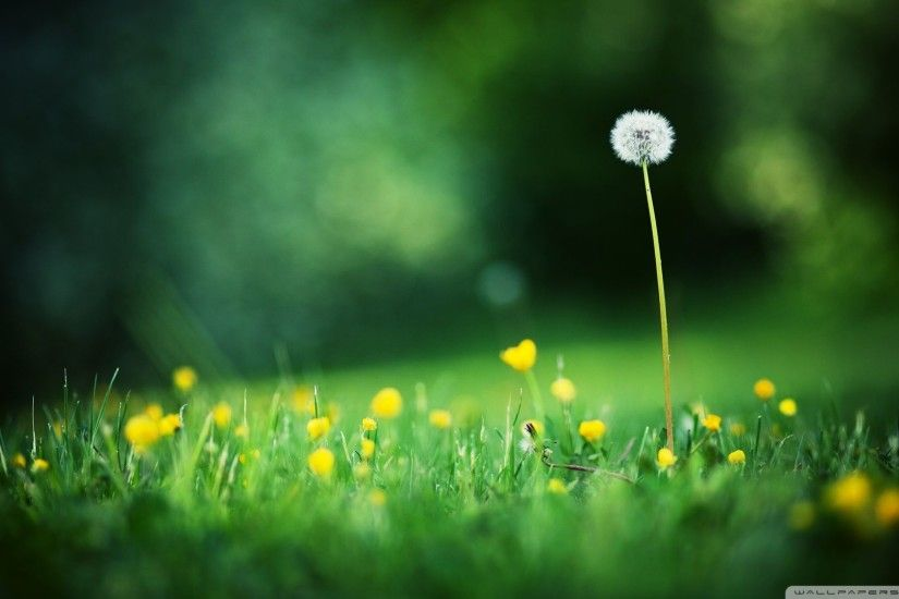 Single-Dandelion-Desktop-Wallpaper.jpg 1,920×1,080 pixels Apple Wallpaper  Iphone