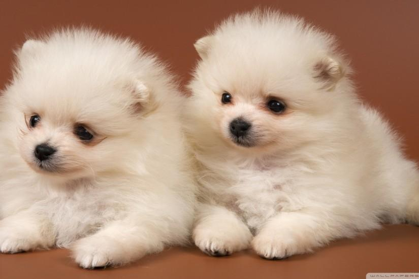 free download puppies wallpaper 1920x1080 for windows 7